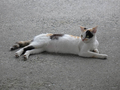 Cats of Houtong, #9674