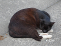 Cats of Houtong, #9690