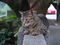 Cats of Houtong, #9708