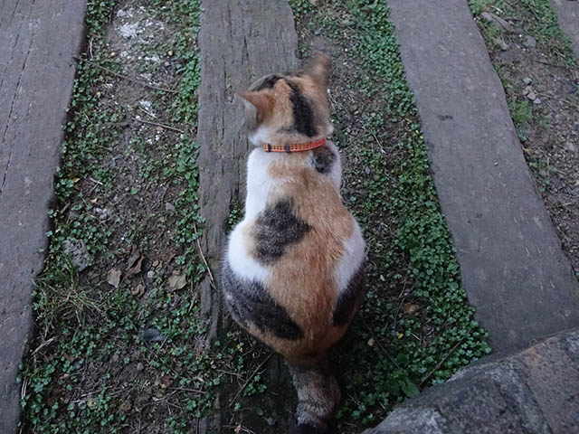 Cats of Houtong, #9711