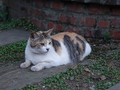 Cats of Houtong, #9718