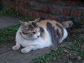 Cats of Houtong, #9721