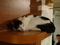 Cats of Minimal Cafe, #9755