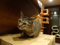 Cats of Minimal Cafe, #9787