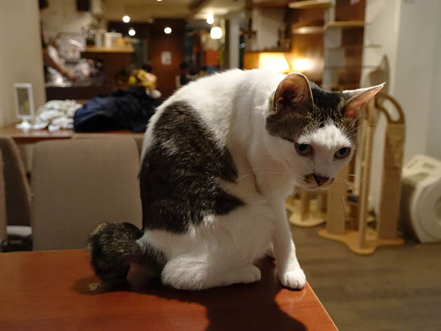 Cats of Minimal Cafe, #9800