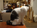 Cats of Minimal Cafe, #9801