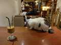 Cats of Minimal Cafe, #9802