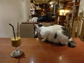 Cats of Minimal Cafe, #9803