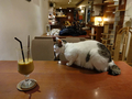 Cats of Minimal Cafe, #9804