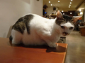 Cats of Minimal Cafe, #9806