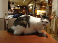 Cats of Minimal Cafe, #9807