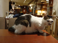 Cats of Minimal Cafe, #9808