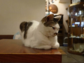 Cats of Minimal Cafe, #9812