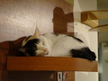 Cats of Minimal Cafe, #9815
