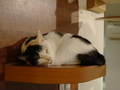 Cats of Minimal Cafe, #9816