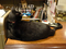 Cats of Minimal Cafe, #9817