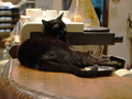 Cats of Minimal Cafe, #9820