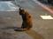 Cats of Taipei, #9832