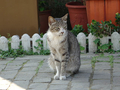 Cats of Houtong, #9866