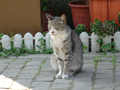 Cats of Houtong, #9867