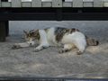 Cats of Houtong, #9922