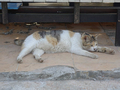 Cats of Houtong, #9946