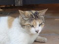 Cats of Houtong, #9949