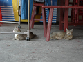 Cats of Houtong, #9993