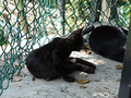Cats of Houtong, #A012