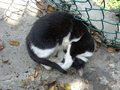 Cats of Houtong, #A015
