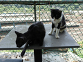 Cats of Houtong, #A025
