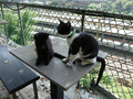 Cats of Houtong, #A026