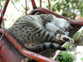 Cats of Houtong, #A032