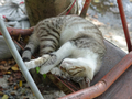Cats of Houtong, #A033
