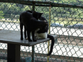 Cats of Houtong, #A035