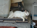 Cats of Houtong, #A040