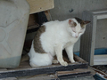 Cats of Houtong, #A042