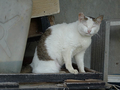 Cats of Houtong, #A043