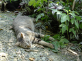 Cats of Houtong, #A051