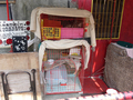 Cats of Houtong, #A057