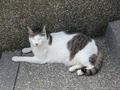 Cats of Houtong, #A058