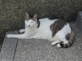 Cats of Houtong, #A059