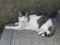 Cats of Houtong, #A060