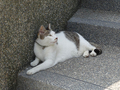 Cats of Houtong, #A061