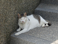 Cats of Houtong, #A062