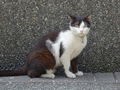 Cats of Houtong, #A064