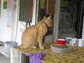 Cats of Houtong, #A068