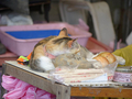 Cats of Houtong, #A075