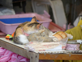 Cats of Houtong, #A076