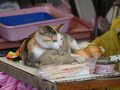 Cats of Houtong, #A078